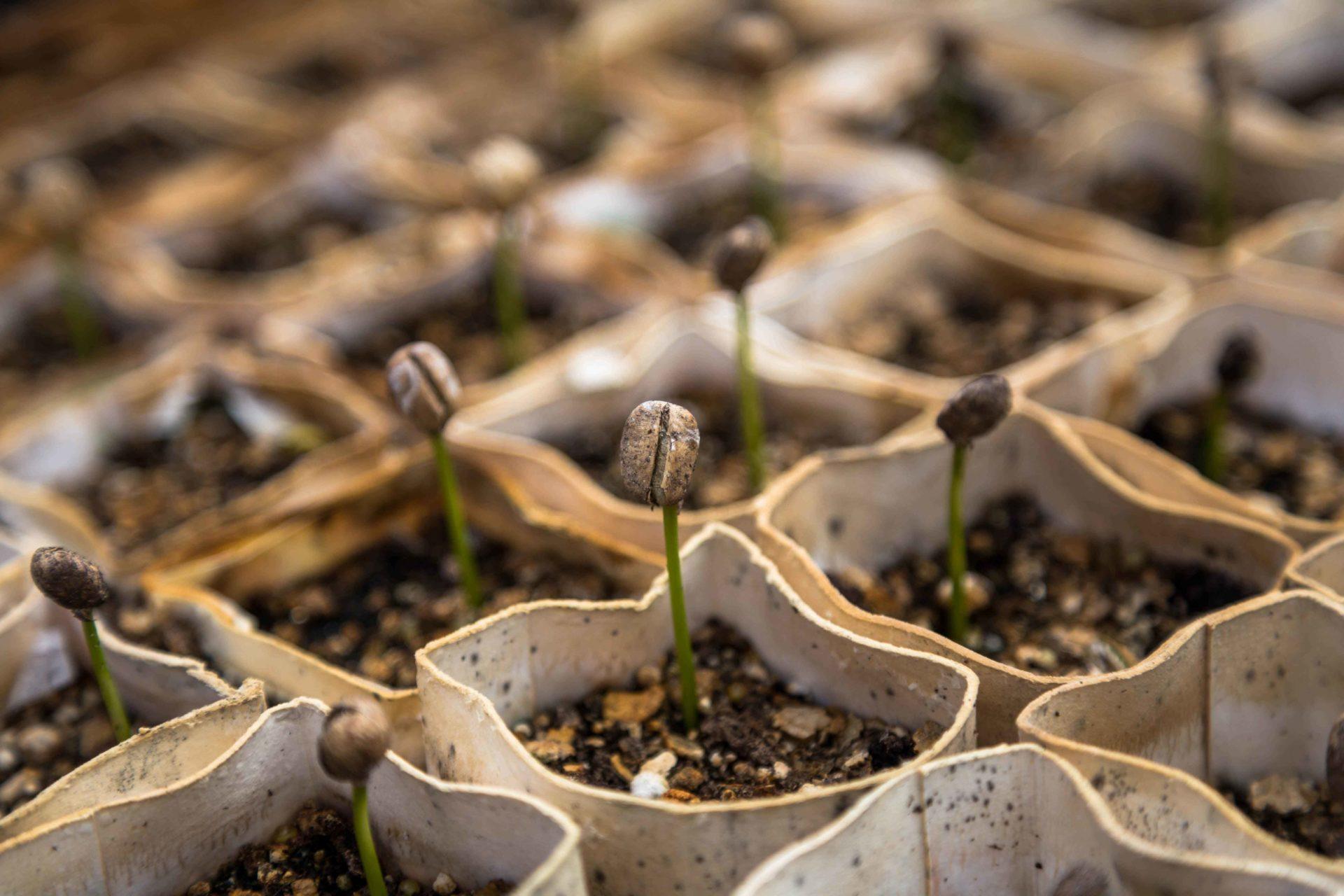 Formation en Jardinerie-Fleuristerie