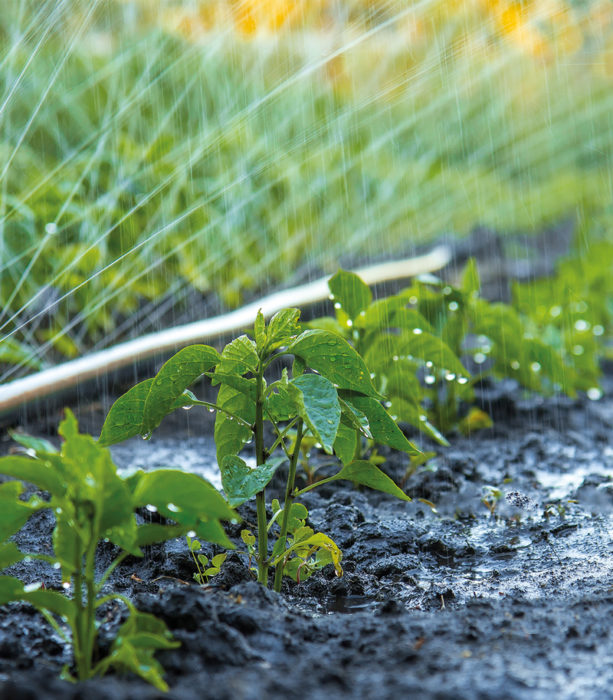 Formation-arrosage-et-irrigation-végétal