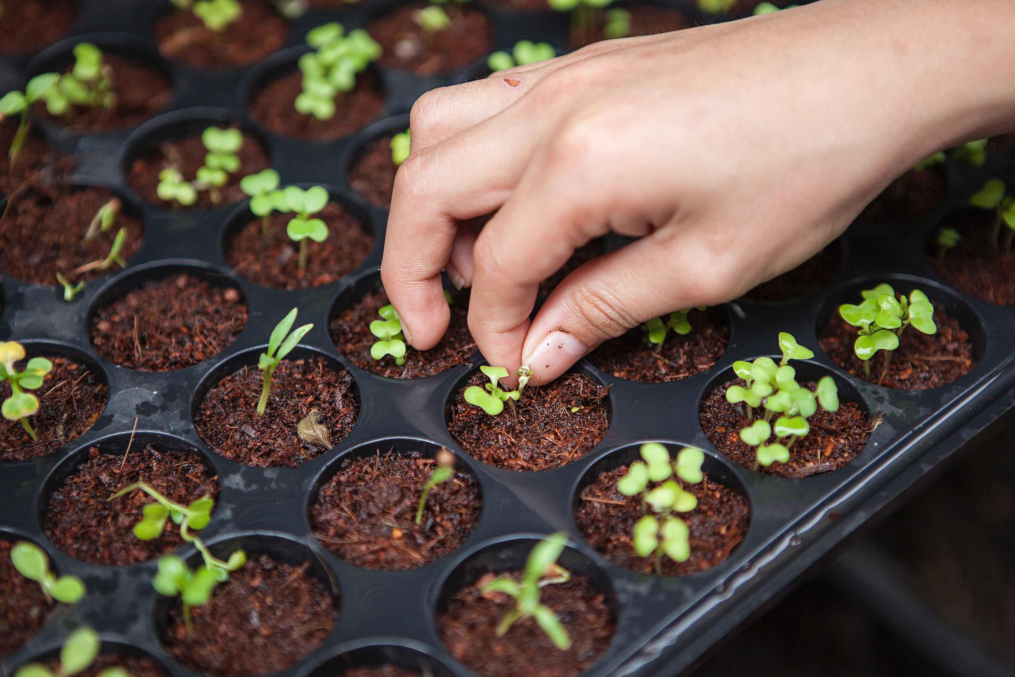 jardinerie-fleuristerie