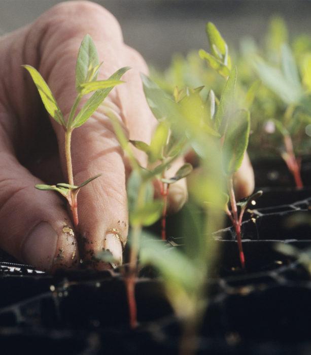 Formation-cnph-piverdiere-ouvrier-de-production-horticole(49)-continue