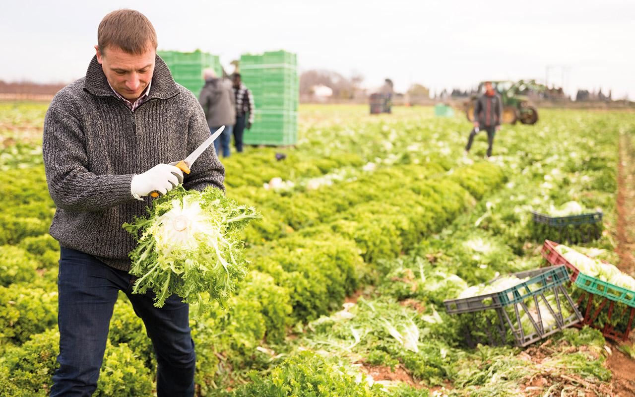Blog_Capacité-Professionnelle-Agricole-BPREA-cnph-piverdiere