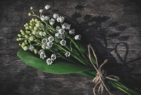 Blog_CNPH_Piverdière_Pourquoi offre-t-on du muguet le 1er mai 1