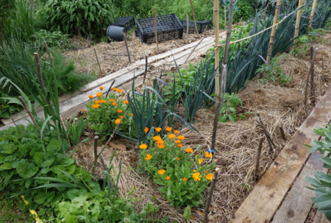 Blog_Permaculture-formation-cnph-piverdiere