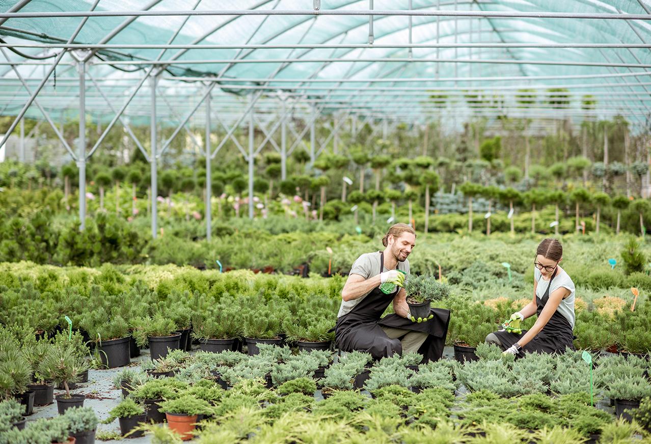Offre-d'emploi-horticulture-fleuriste