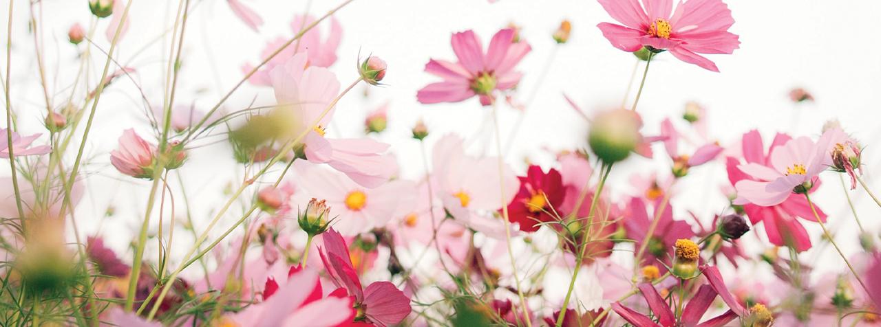 reconversion-professionnelle-fleuriste-horticulture