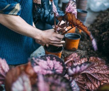 le-métier-d'horticulteur